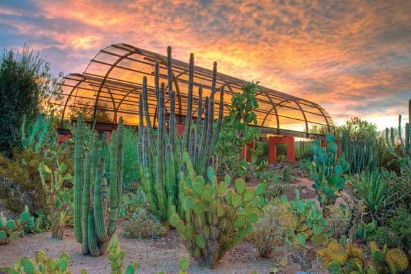 باغ گیاه شناسی صحرا